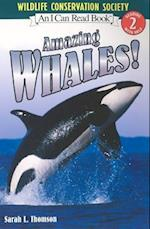 Amazing Whales! (I Can Read. Level 2)