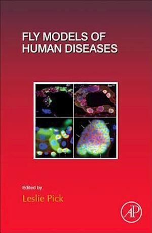 Bog, hardback Fly Models of Human Diseases