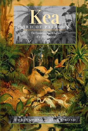 Kea, Bird of Paradox af Judy Diamond, Alan B. Bond
