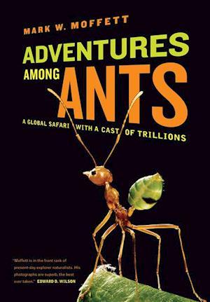 Adventures among Ants af Mark W. Moffett