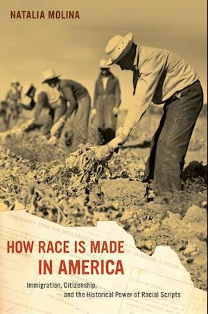 How Race Is Made in America af Natalia Molina