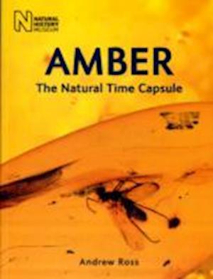 Amber af Andrew Ross
