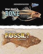 How Does a Bone Become a Fossil? (How Does It Happen)