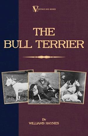 Bull Terrier af Williams Haynes