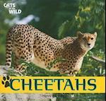 Cheetahs af Henry Randall