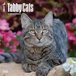 Tabby Cats 2017 Calendar