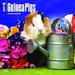 Guinea Pigs 2017 Calendar