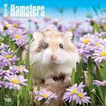 Hamsters 2017 Calendar