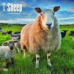Sheep 2017 Calendar