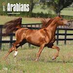 Arabians 2017 Calendar