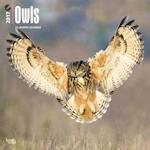 Owls 2017 Calendar