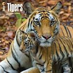 Tigers 2017 Calendar