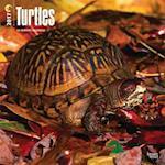 Turtles 2017 Calendar
