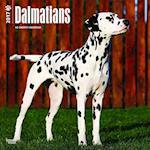 Dalmatians 2017 Calendar
