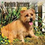 Norfolk Terriers 2017 Calendar