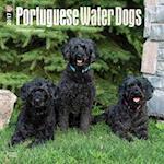 Portuguese Water Dogs 2017 Calendar