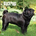 Black Pugs 2017 Calendar