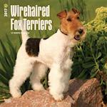 Wirehaired Fox Terriers 2017 Calendar