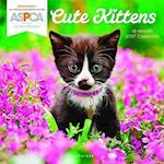Cute Kittens 2017 Calendar