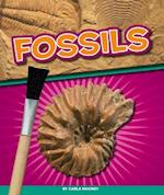 Fossils (Geology Rocks!)