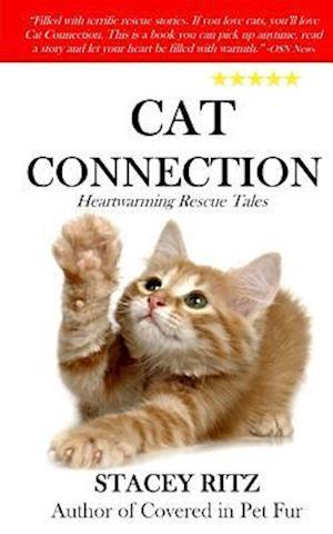 Bog, paperback Cat Connection af Stacey Ritz