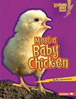 Meet a Baby Chicken (Lightning Bolt Books)