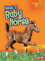 Meet a Baby Horse (Lightning Bolt Books)