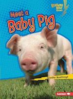 Meet a Baby Pig (Lightning Bolt Books)