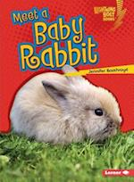 Meet a Baby Rabbit (Lightning Bolt Books)