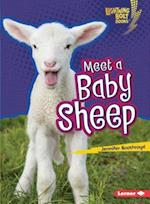 Meet a Baby Sheep (Lightning Bolt Books)