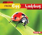 From Egg to Ladybug (Start to Finish)