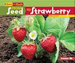 From Seed to Strawberry (Start to Finish)