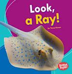 Look, a Ray! (Bumba Books I See Ocean Animals)