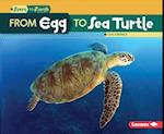 From Egg to Sea Turtle (Start to Finish)