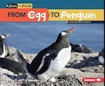 From Egg to Penguin (Start to Finish)