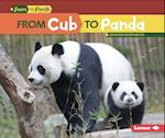 From Cub to Panda (Start to Finish)