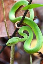 Green Pit Viper Snake Journal