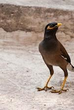 A Mynah Walking Down the Road, Birds of the World