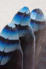 Feathers of a Blue Jay, Birds of the World