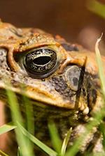 Cane Toad in Australia, for the Love of Animals