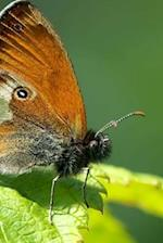 Coenonympha Arcania Butterfly, for the Love of Nature