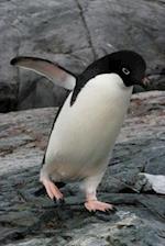 Adelie Penguin Journal
