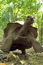 The Aldabra Giant Tortoise Cometh Journal