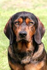 Portrait of an Alpine Dachsbracke Dog Journal