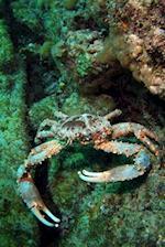 Clinging Crab Journal