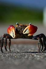 The Defensive Crab Journal