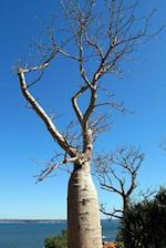 Solitary Baobab Tree, for the Love of Nature