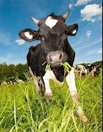 Hey Now Cow, Jumbo Oversized