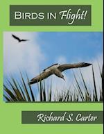 Birds in Flight!