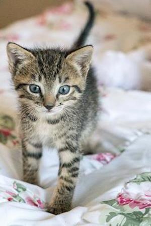 A Gray Striped Kitten Walking Journal af Cs Creations